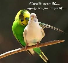 Cheating In Love Quotes Malayalam Bisognieducativispeciali